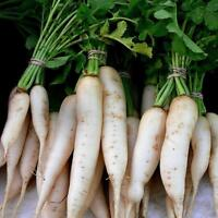 Daikon seeds winter radish 2g Farmer's dream