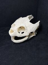 New ListingHuge Common Snapping Turtle Skull #810, Taxidermy, Bones, Hunting, Shell, Craft