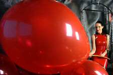 1 South American 40 - 45+ inch **RARE** looner very strong big balloon looner