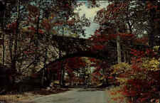 Buck Hill Pennsylvania Amerika USA AK ~1960 Pocono Mountains Bridge Brücke Wald