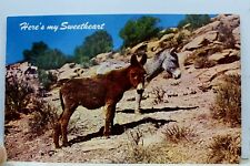Scenic Donkey Mule Desert Canaries Sweethearts Postcard Old Vintage Card View Pc