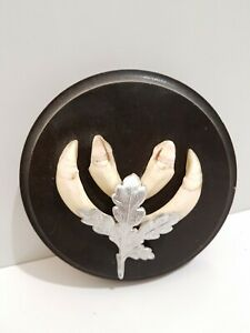 Taxidermy Wild Boar Tusks On Round Shield. Shield Is 12cm Across. #23
