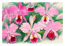 Linden Orchid 6 by Jean Linden Orchids A4 Art Print Flower Art