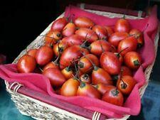 50 x Samen rote Tamarillo Tomatenbaum Solanum betaceum Tomaten quality seeds