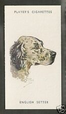 1940 Peter Biegel Dog Art Head Study Player Cigarette Card Blue ENGLISH SETTER