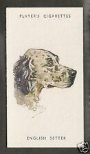1940 Peter Biegel Dog Art Head Study Player Cigarette Card Blue ENGLISH SETTER
