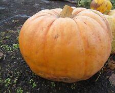 Giant Pumpkin Seeds 25 Monster Pumpkin Seeds Large Pumpkin