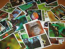 Figurine Cards Despar Interspar Iper Animali LEGGI - Mancoliste
