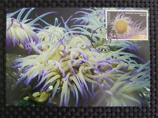 GREECE MK CORAL KORALLEN ANEMONE MAXIMUMKARTE CARTE MAXIMUM CARD MC CM c1138