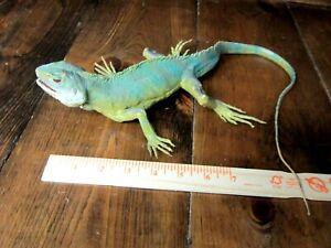 Huge AAA Iguana lizard model