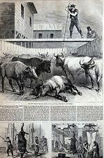Communipaw NJ 1867 New Slaughterhouse ANIMAL CRUELTY Matted Print Full Story