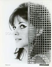 CLAUDIA CARDINALE 1963  VINTAGE PHOTO ORIGINAL