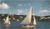 Hamilton Harbour 1950s Sailboats Postcard 3082