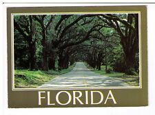Postcard: Stately live oak trees shade this avenue in tropical Florida, USA