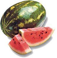 Watermelon- Sugar Baby- 30 Seeds