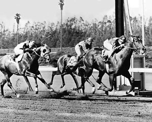 1955 Racehorses SWAPS vs Nashua Glossy 8x10 Photo Kentucky Derby Bill Shoemaker
