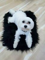 Black Sheepskin Pet Bed Fur Chair Motorcycle Seat Cover Dog Cat Mat Delicate UK