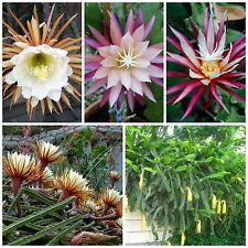 20 semi in miscuglio di Selenicereus mix ,piante grasse,seed cactus mix