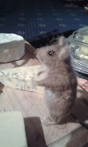 Needle felting kit Brown Mouse British Wool