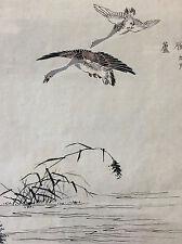 Kono Naotoyo Bairei estampe japonaise vol oie sauvage maître Kacho-e XIX e Japon