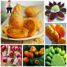 Prickly Pear Cactus Seeds Plants Sweet Nutritious Edible Fruits Rare 100pcs