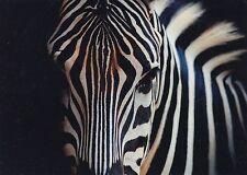 (48157) Postcard Zebra - unposted