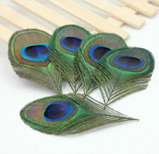 5 Peacock Eye Feather Large Trimmed 10-12 cm Perfect for Hats Fascinators Craft
