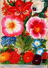 Mayflower Premium Vintage Flowers Seed Packet Catalogue Advertisement Poster