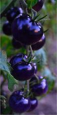 Schwarze Tomaten Saatgut, Lycopin haltig,  10+ Samen aus Eigenanbau Tomate