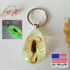 Luminous Real Brown Scorpion Key Chain Taxidermy Lucite Tear Drop Shape Display