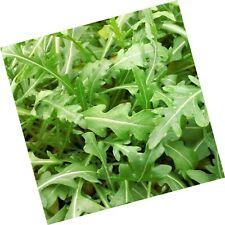 Bulk Organic Arugula Seeds (1/4 lb) 41,250 Seeds 1/4 lb