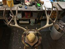 Big Set Of Mule Deer Antlers Horns Elk Moose Rack