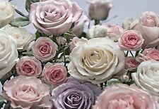 MURALE Parete Rose floraison Carta da parati Foto 368x254cm fiori di rosa