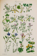Crowfoot etc - James Sowerby Antique Botanical Wild Flower Print 1870s - 1601