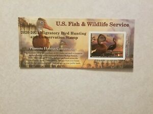 2020 US Fish & Wildlife Duck Stamp Waterfowl Collectable