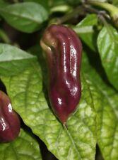 10 SEMI PEPERONCINO - PURPLE BHUT JOLOKIA