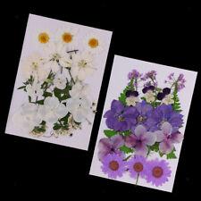 Pressed Flowers Beautiful Purple 5 Petals Organic DIY Hand Floral Crafts HomeDec