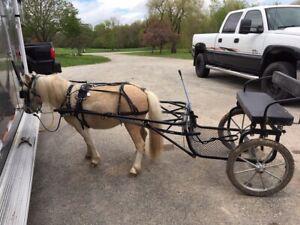 Weaver Synthetic Biothane Sm PONY Large Mini Horse Size Driving Harness BIT USA
