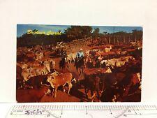 Postcard Brahma Corral Cowboys Riding Horse Cows Ranch Vintage