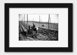 Farmer with Tractor at a Hop Farm Sussex England 1935 Print 2