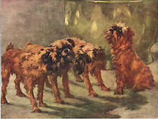 More details for brussels griffon group original dog colour art print page from 1934 by maud earl