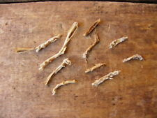 No. 1 Taxidermy Skeletal Mummified Domestic Mice Rodent Feet Foot Paws Supplies