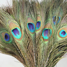5 Natural Peacock Eye Feathers 25-30cm DIY Craft Millinery Vase Decor Costume