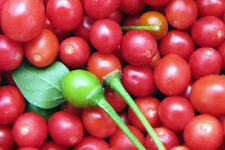 25 Premium Chillepin AKA Tepin Pepper Seeds from Organically Grown Peppers