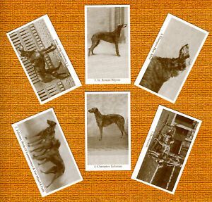DEERHOUND SET OF SIX NAMED DOG COLLECTABLE TRADE CARDS GREAT GIFT