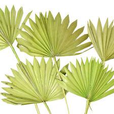Dried Natural Sun Palm Leaves Bundle, Light Green, 5-Piece