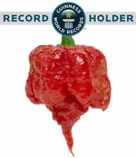 25 X CAROLINA REAPER CHILLI SEEDS - WORLDS HOTTEST CHILLI!!