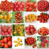 100Pcs Seeds Tomato Edible Organic Plants Viable Vegetables in Garden Home