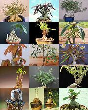 BONSAI PLANTS MIX rare base plant exotic caudiciform succulent caudex  100 seeds