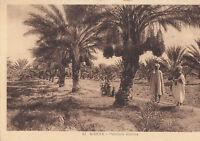 Algerien - CPA - Biskra - Dattelpalmen (D4816)